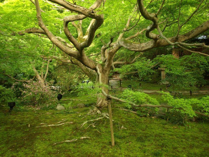 árbol de variantes